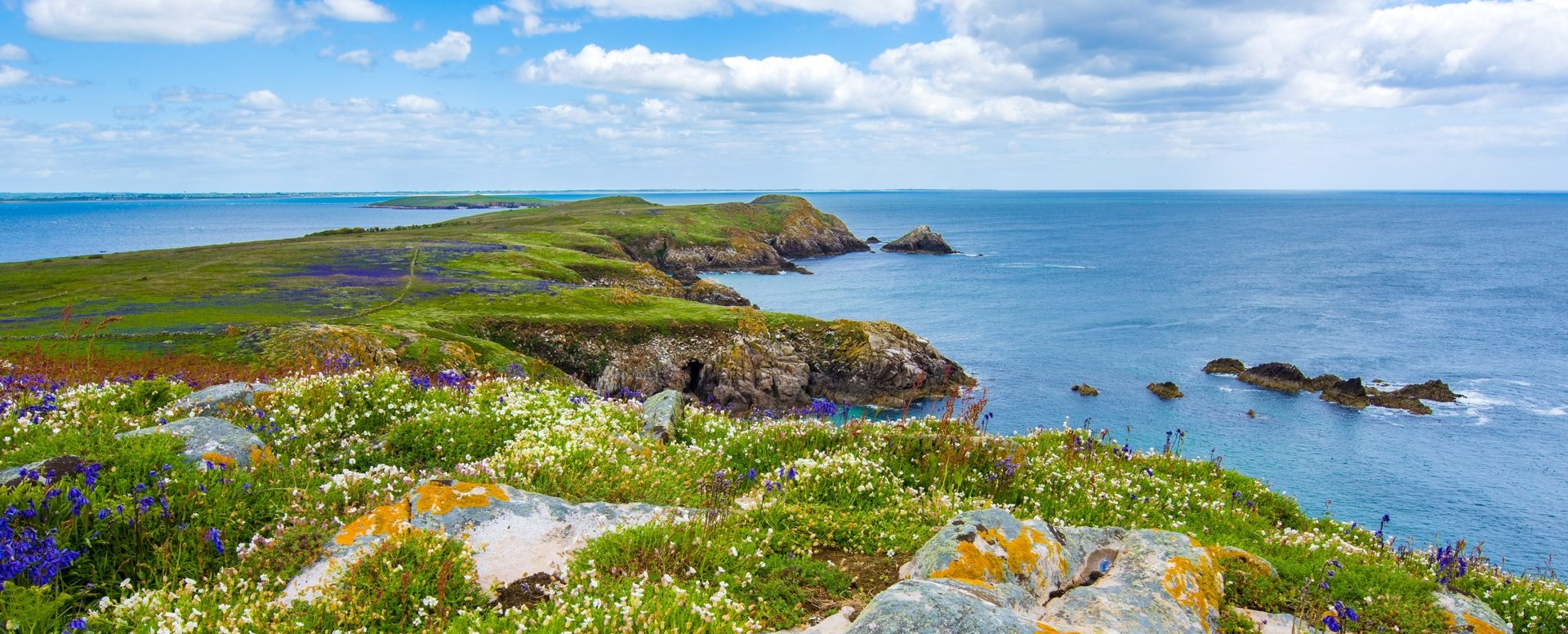 Saltee Islands Wexford